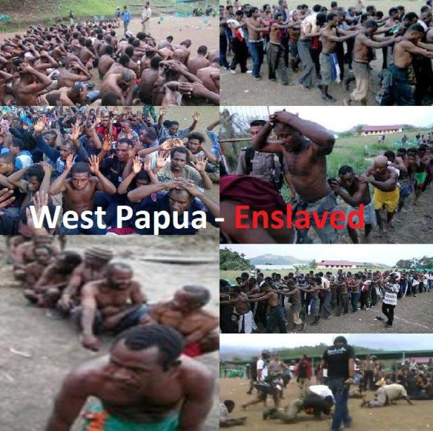 West Papuans being treated as slaves on their land